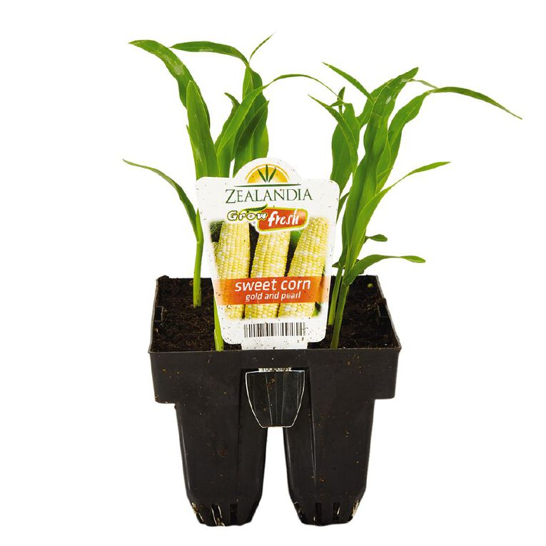 Growfresh Sweet Corn Gold & Pearl, , hi-res