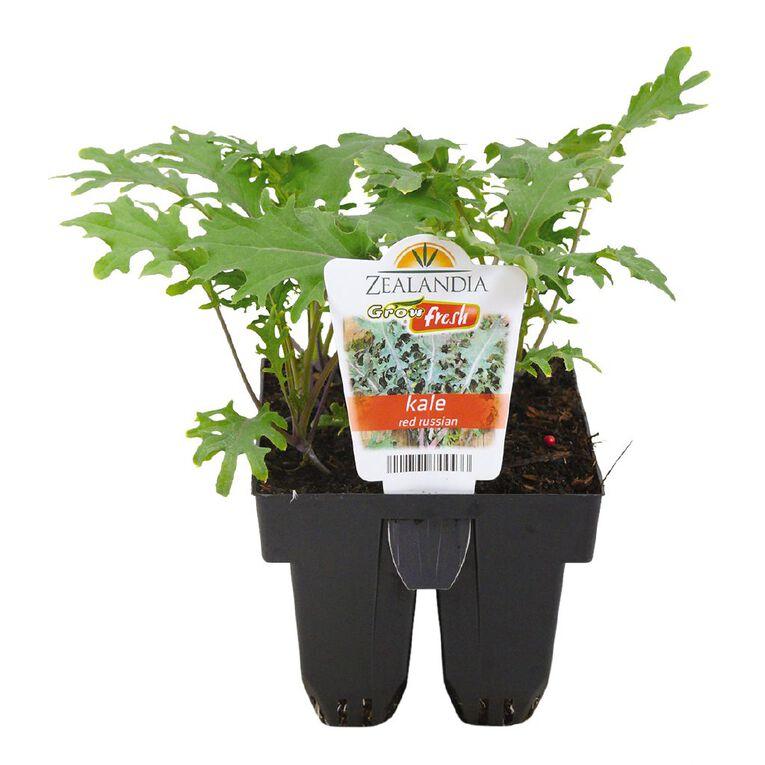 Growfresh Kale Red Russian, , hi-res