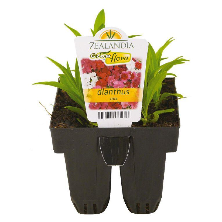 Growflora Dianthus Telstar Mix, , hi-res