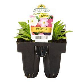 Growflora Petunia Pepe Mix