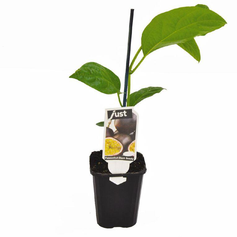 Just Brand Passionfruit Black Beauty 9cm Pot, , hi-res