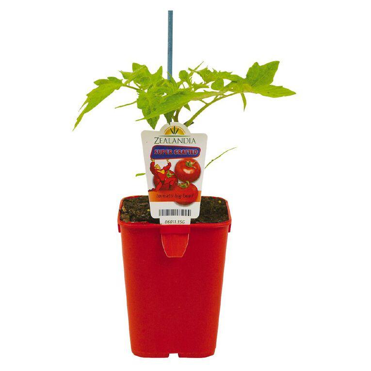 Supergrafted Tomato Big Beef 1.3L Pot, , hi-res
