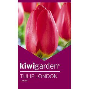Kiwi Garden Tulip London 8PK