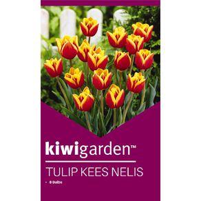 Kiwi Garden Tulip Kees Nelis 8PK