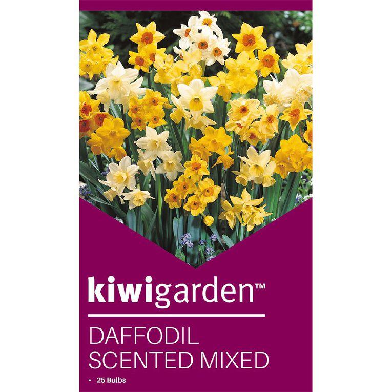 Kiwi Garden Daffodil Scented Mixed 25PK, , hi-res