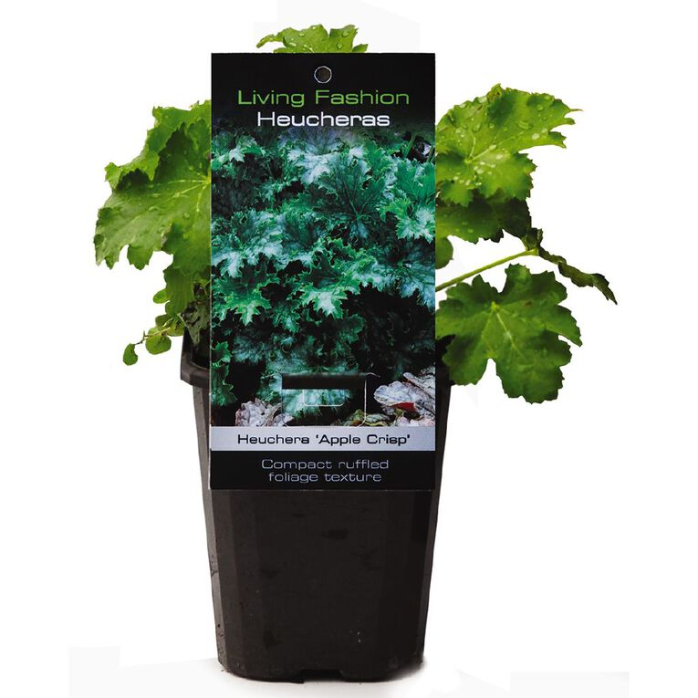 Perennials Assorted 9cm Pot, , hi-res