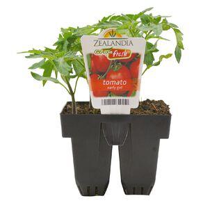 Growfresh Tomato Early Girl