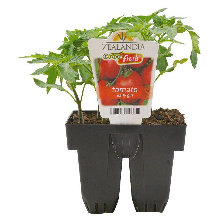 Growfresh Tomato Early Girl, , hi-res