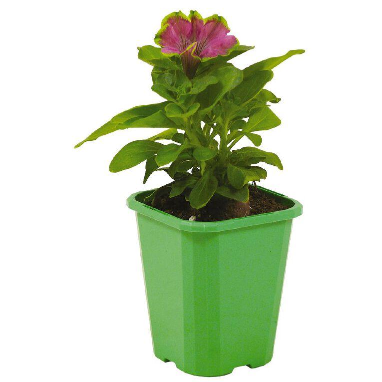 Petunia Be Limey 9cm Pot, , hi-res