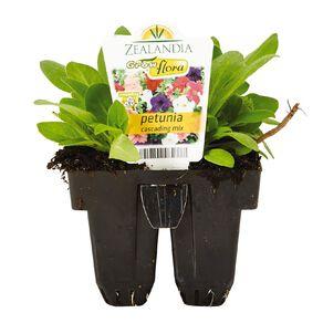 Growflora Petunia Cascade Mix