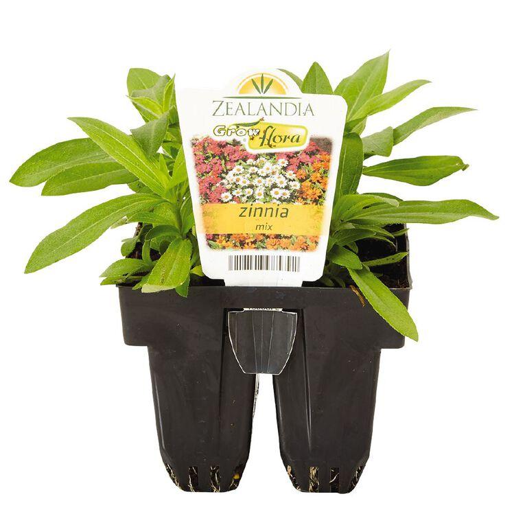 Growflora Zinnia Mix, , hi-res