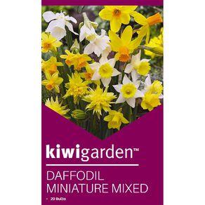 Kiwi Garden Daffodil Miniature Mixed 20PK