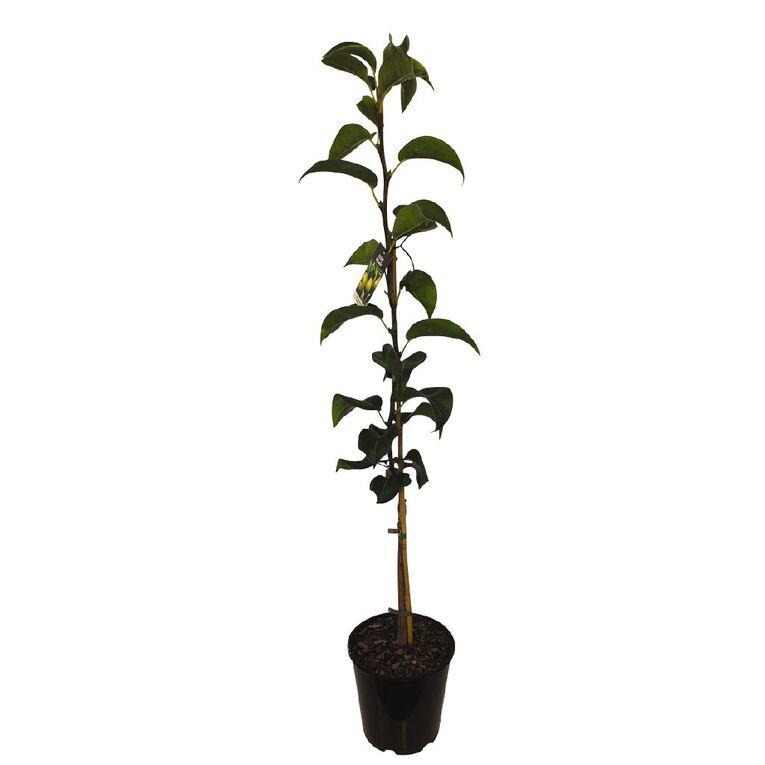Nashi Pear Mixed 4.7L Pot, , hi-res