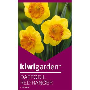 Kiwi Garden Daffodil Red Ranger 10PK