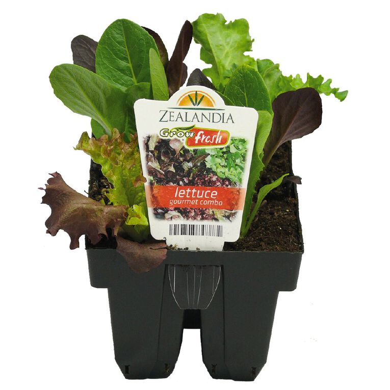 Growfresh Lettuce Gourmet Combo, , hi-res