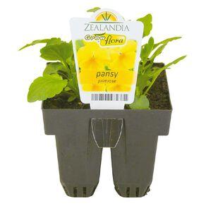 Growflora Pansy Primrose