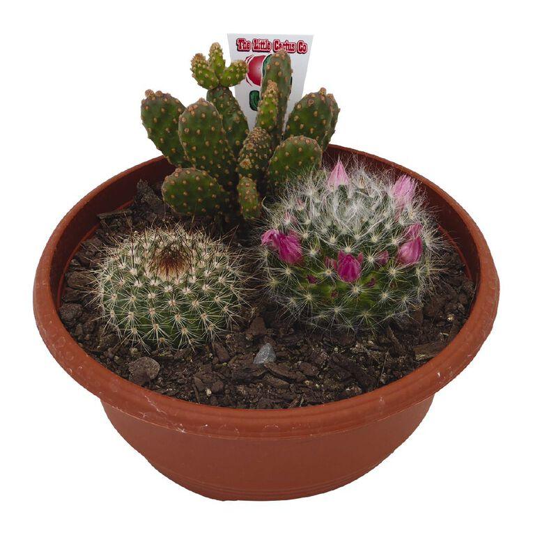 Cacti Bowl 17cm Bowl, , hi-res