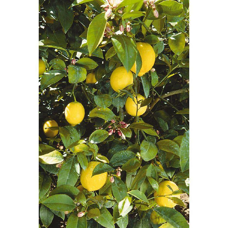 Citrus Lemon Meyer 4.7L Pot, , hi-res