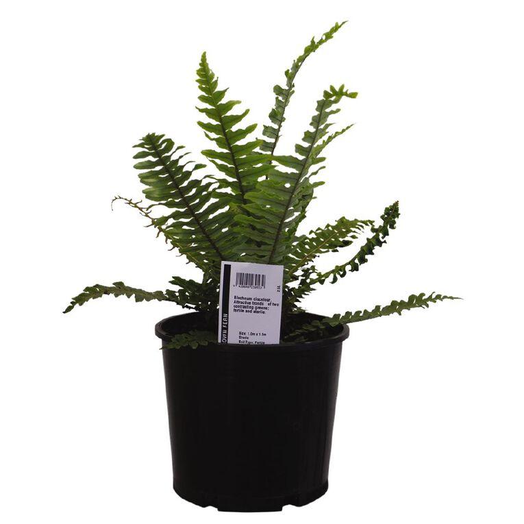 Ferns 2L Pot, , hi-res
