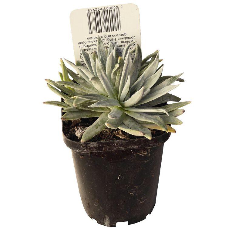 Succulents 9cm Pot, , hi-res