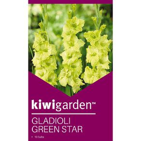 Kiwi Garden Gladioli Corm Green Star 10PK