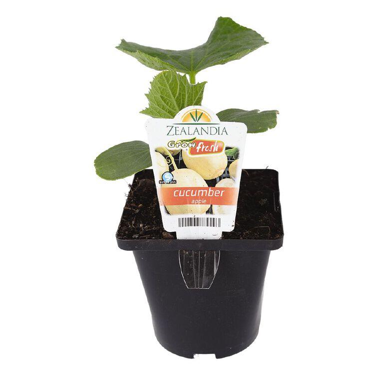 Growfresh Single Cucumber Apple 10cm Pot, , hi-res
