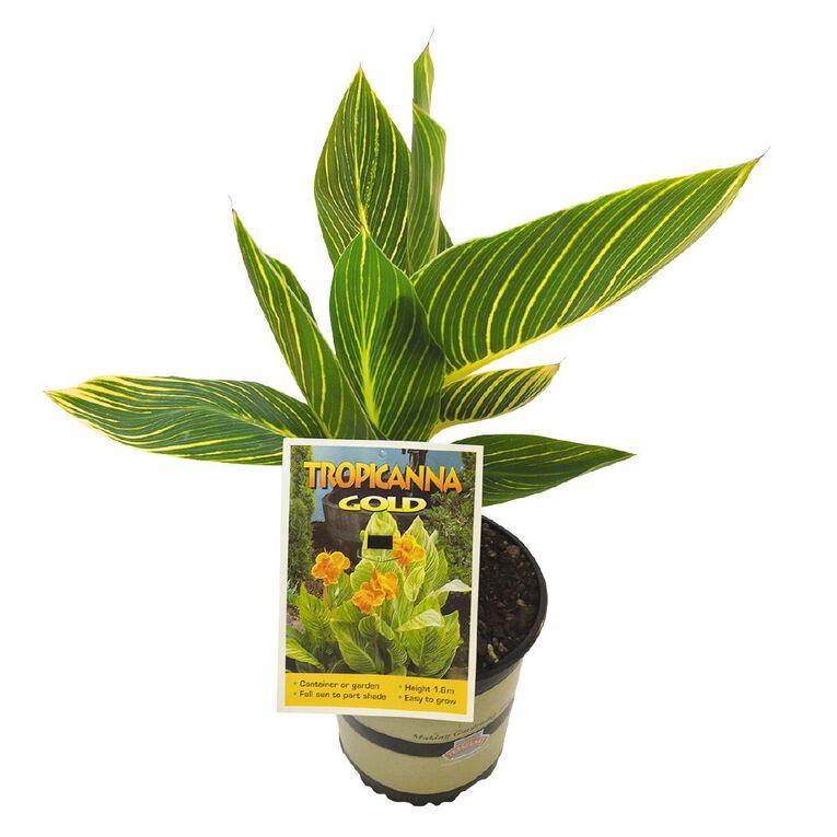 Canna Tropicanna 2.5L Pot, , hi-res