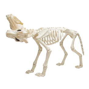Seasons Animated 2-headed Dog