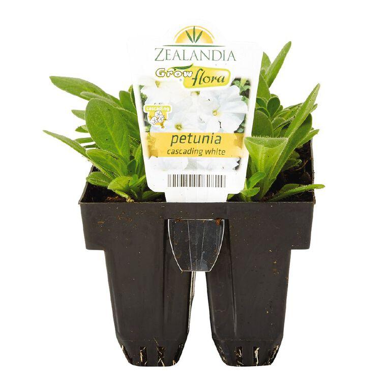 Growflora Petunia Cascade White, , hi-res