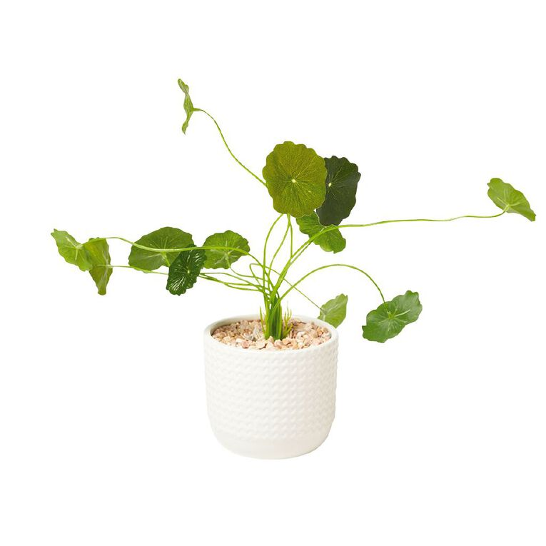 Living & Co Artificial Pilea In Textured Pot 12cm x 30cm White, , hi-res image number null