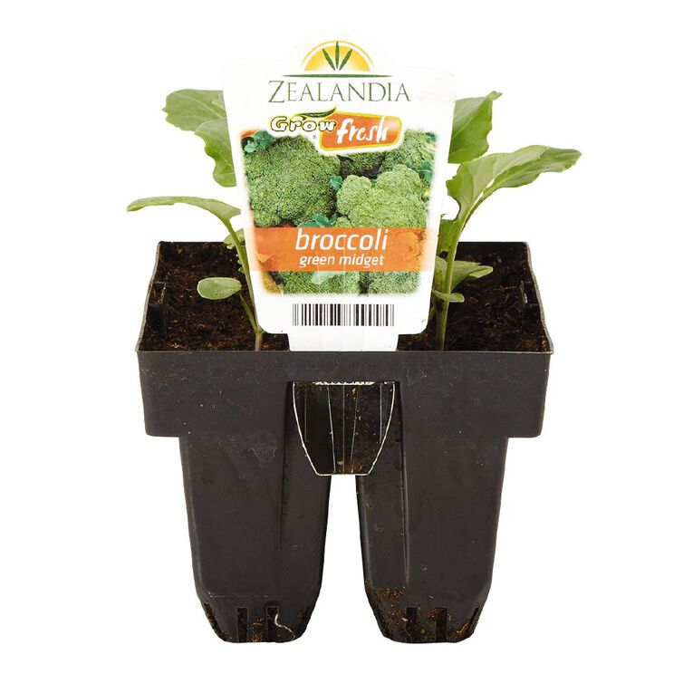 Growfresh Broccoli Green Midget, , hi-res