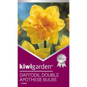 Kiwi Garden Daffodil Double Apothese 20PK