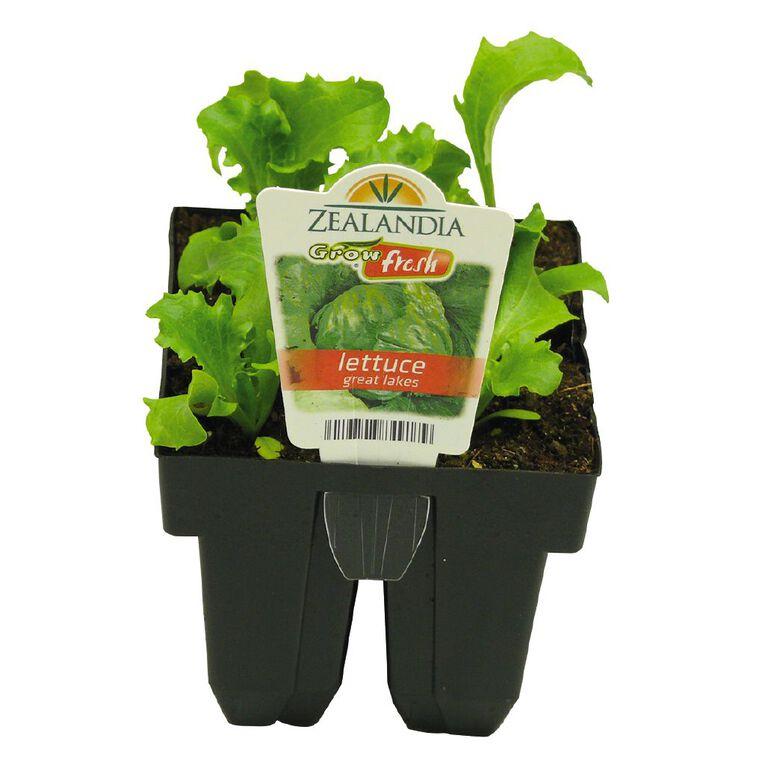 Growfresh Lettuce Great Lakes, , hi-res