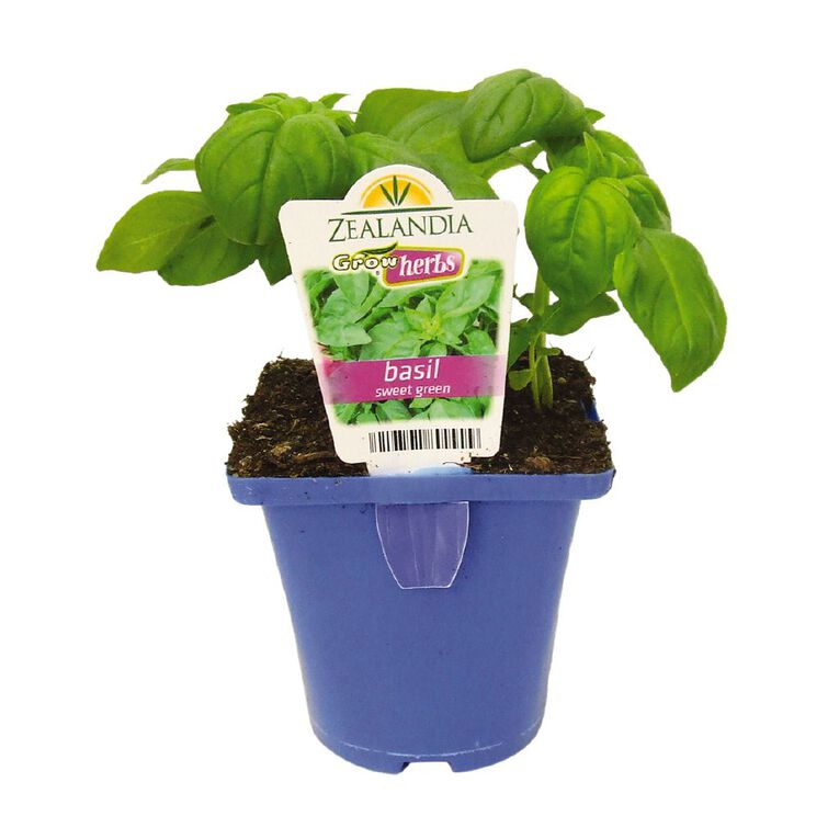 Growherbs Basil Sweet, , hi-res