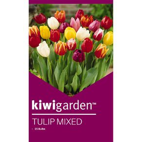Kiwi Garden Tulip Mixed 25PK
