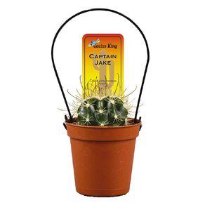 Cacti Assorted 5.5cm Pot