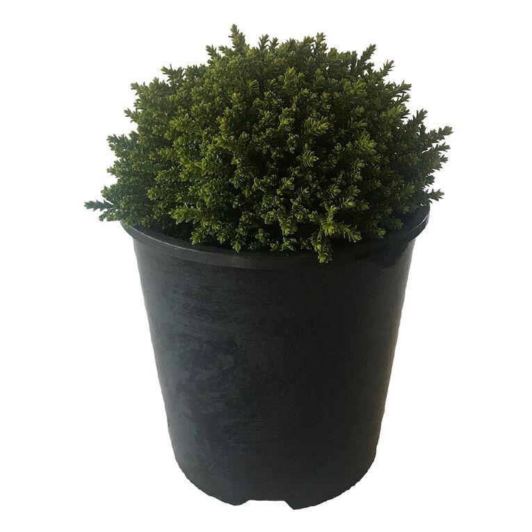 Hebe Emerald Gem 1.9L Pot, , hi-res