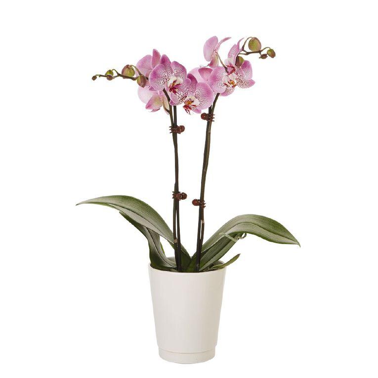 Phalaenopsis Orchid Ceramic 12cm Pot, , hi-res