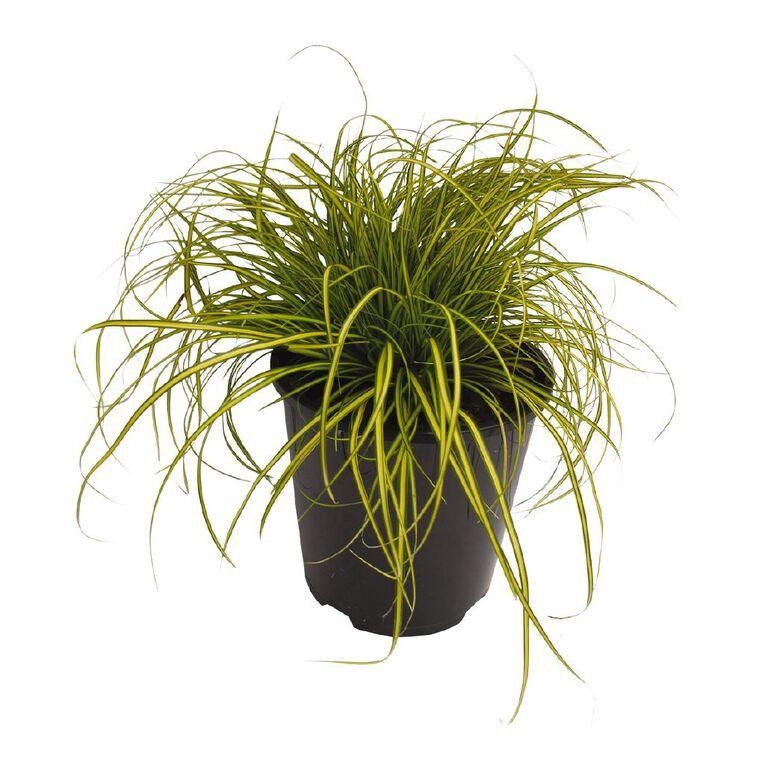Carex Eversheen 1.9L Pot, , hi-res