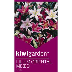Kiwi Garden Oriental Lilium Bulb Mixed