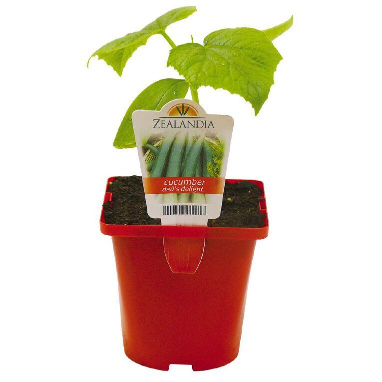 Dad's Delight Cucumber Telegraph 10cm Pot, , hi-res