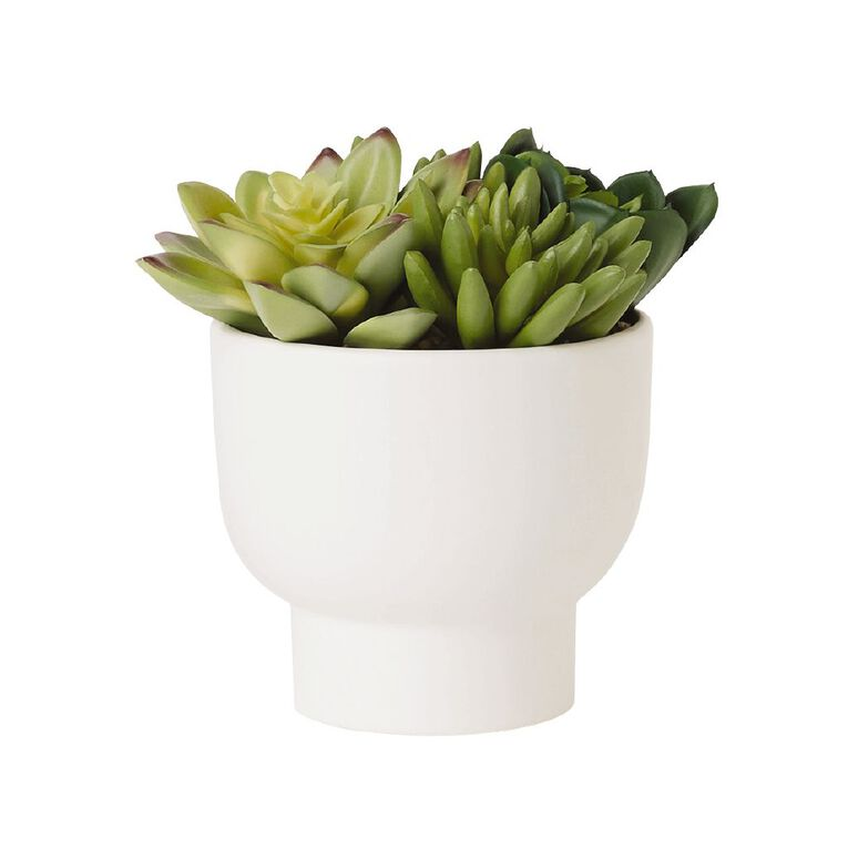 Living & Co Artificial Multi Succulent Potted Plant 8x8x12cm White, , hi-res