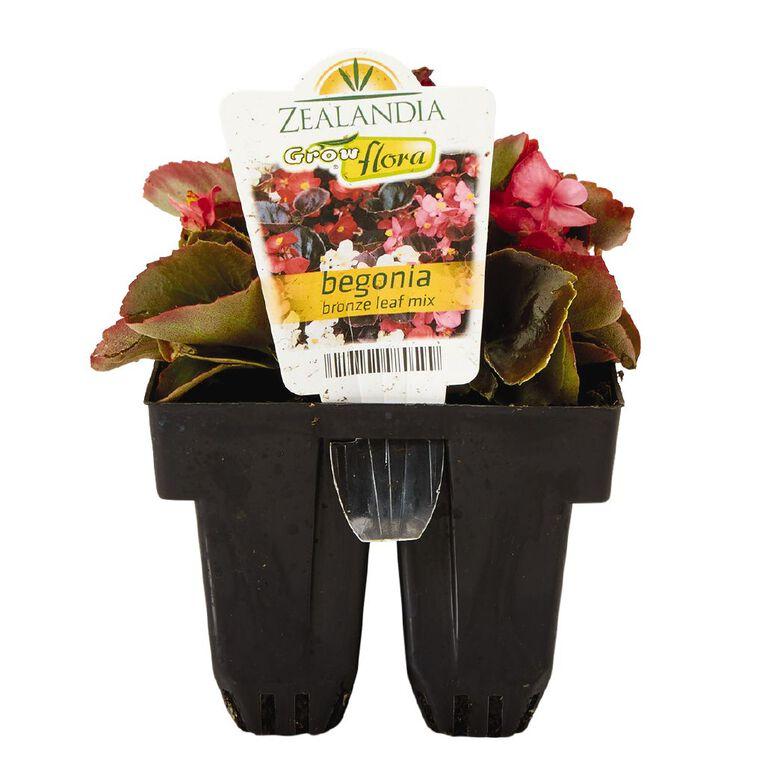 Growflora Begonia Bronze Leaf Mix, , hi-res