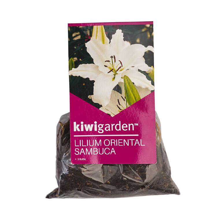 Kiwi Garden Oriental Lilium Bulb Sambuca 3PK, , hi-res