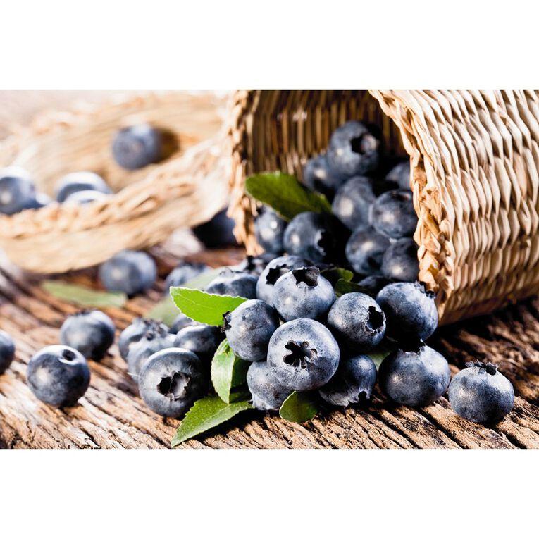 Fruit Sation Blueberry Centurion Pot 12cm Pot, , hi-res