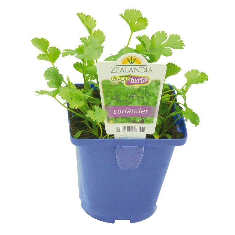 Growherbs Coriander, , hi-res