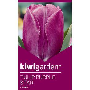 Kiwi Garden Tulip Purple Star 8PK