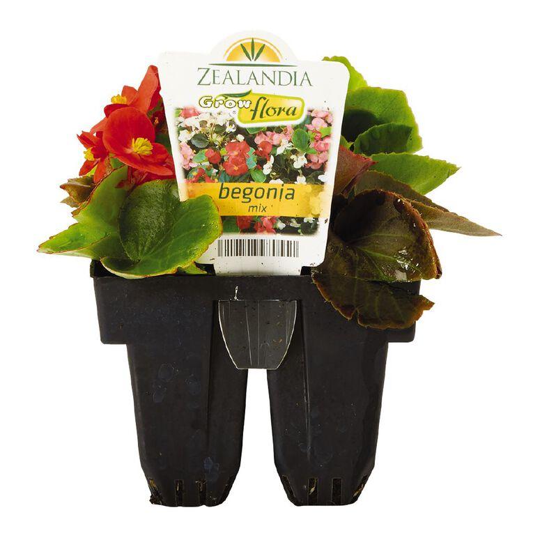 Growflora Begonia Mix, , hi-res