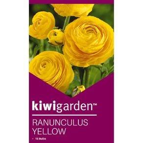Kiwi Garden Ranunculus Yellow 15PK