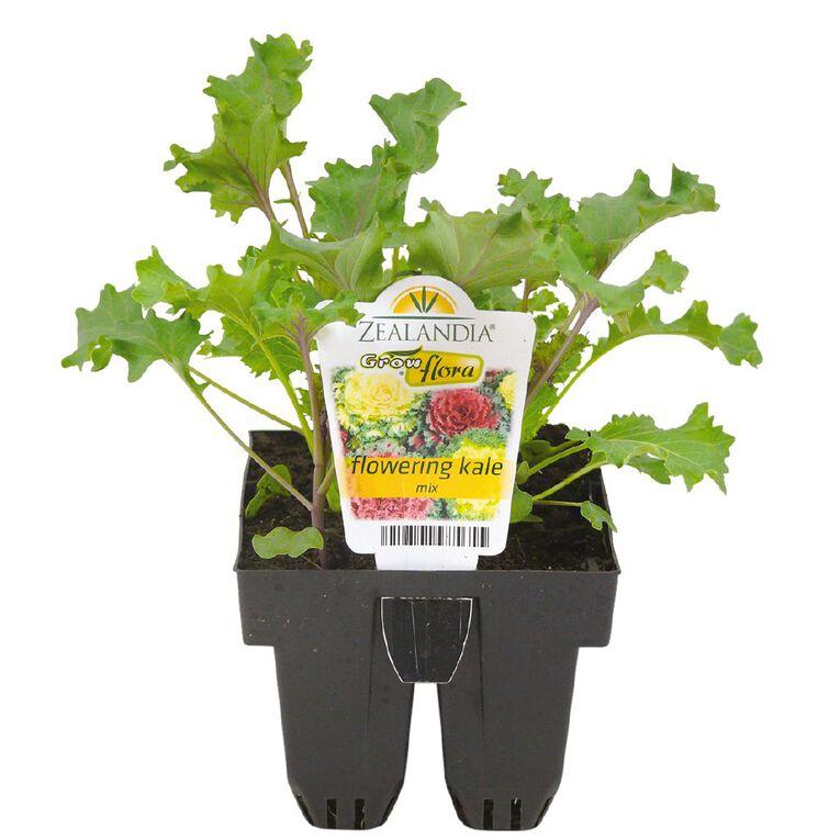 Growflora Flowering Kale Naoya Mix, , hi-res